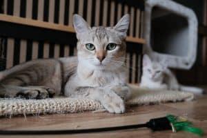 Chat fraichement soigné