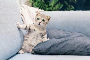 Chat qui a peur !